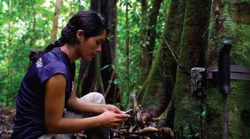 """Išmanioji aplinkosauga: kaip seni """"Huawei"""" telefonai ir dirbtinis intelektas gali išgelbėti miškus?"""