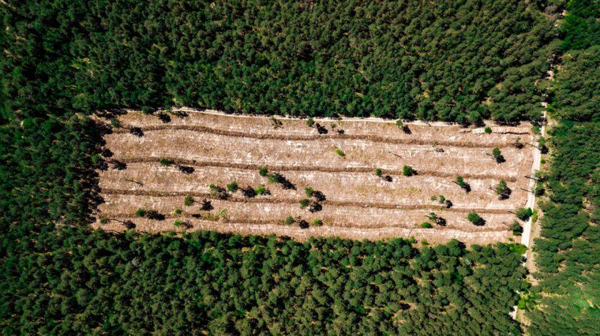 Gamtą saugančios technologijos: prisideda prie resursų mažinimo ir miškų išsaugojimo