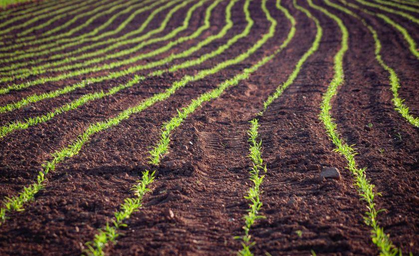 Virš laukų skraidantys dronai ir trąšas skirstantis dirbtinis intelektas: kaip žemės ūkį pakeis žalioji ES strategija?